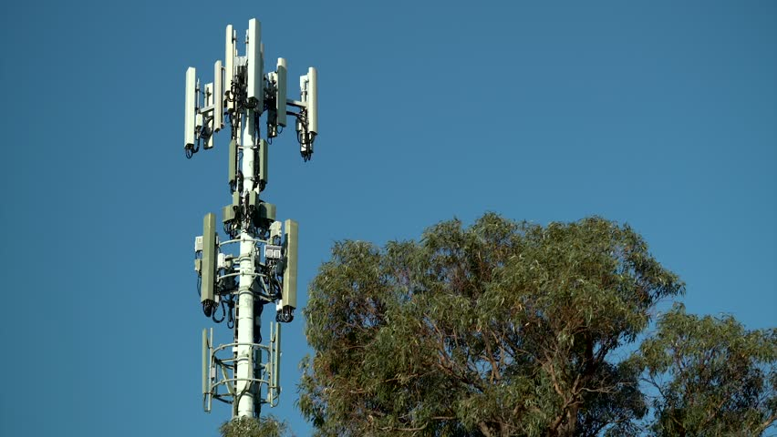 High Levels of Damage Have Been Discovered In Trees Near Cell Phone Towers